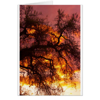 Sunset against a Cottonwood Card