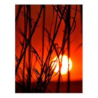 Sunset behind the bamboo postcard