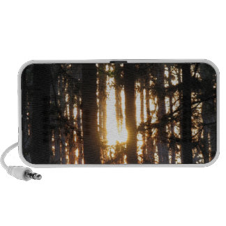 Sunset in the forest speaker system
