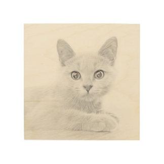 SUPER CUTE Cat Portrait Fine Art Photograph
