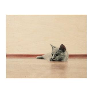 SUPER CUTE Kitten Portrait Photograph Wood Wall Art