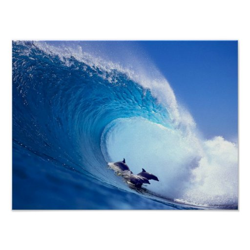 Surfing Dolphins Posters