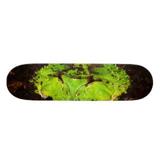 Surinam Horned Frog Ceratophrys Cornuta Skateboard Deck