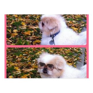 süsser Hund Postkarte