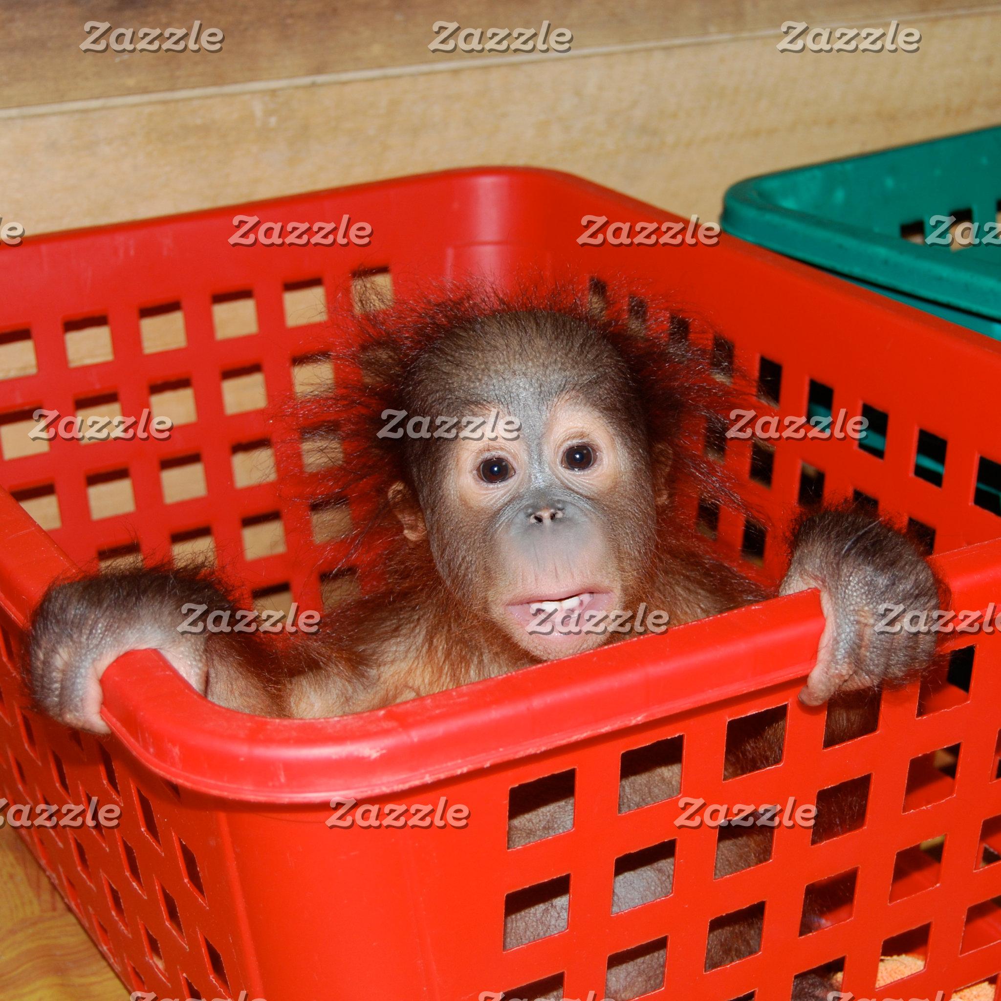 Apes/ Orangutans