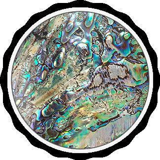 Queen paua shell