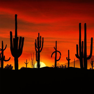 Illustration of cactus tree when the sunset