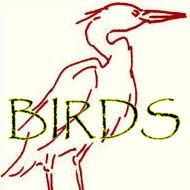 BIRDS, Dodos Included