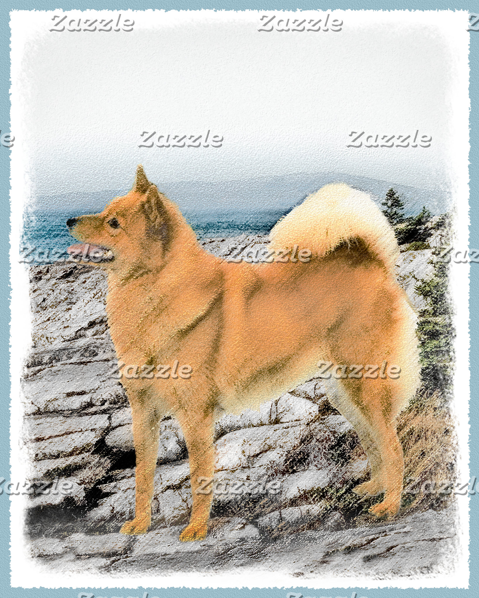 Finnish Spitz at the Seashore