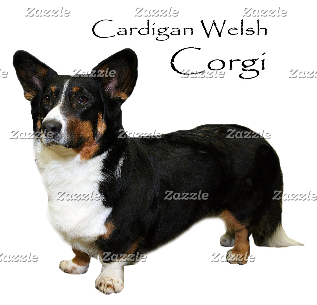 Corgi (Cardigan Welsh)