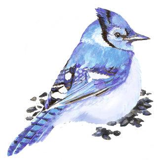 Blue Jay Stellar Jay Grey Jays