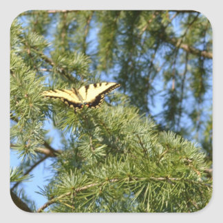 Swallowtail Butterfly in a Pine Tree Square Sticker