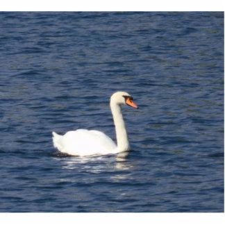 Swan Photo Sculpture