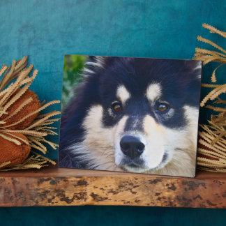 Sweet Finnish Lapphund Plaque