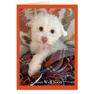 Sweet puppy wrapped in a blanket Get Well Card