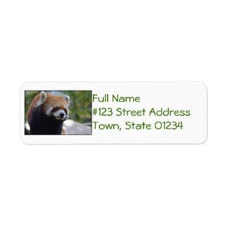 Sweet Red Panda Bear