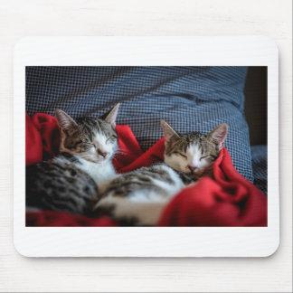 Sweet sleeping Kitties Mouse Pad