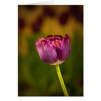 Sweet tulip, invitations, easter, spring, thanks card