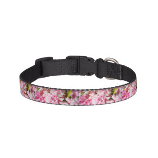 Sweet William Pink Flowers Pet Collar