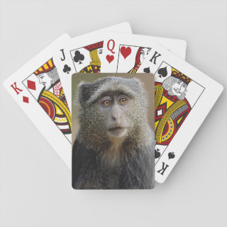 Sykes or Blue Monkey, Cercopithecus mitis, Playing Cards