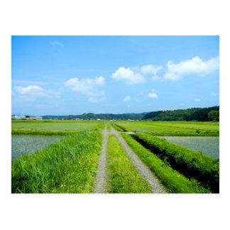 Tanbo Road Postcard