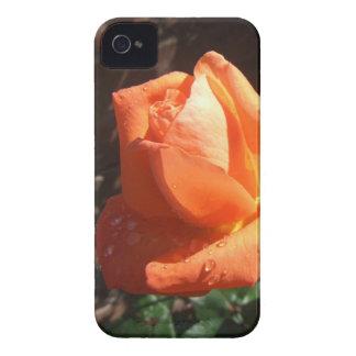 Tangerine Rose Case-Mate iPhone 4 Case