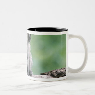 Tanzania, Ngorogoro Crater. Close-up of wild Two-Tone Coffee Mug