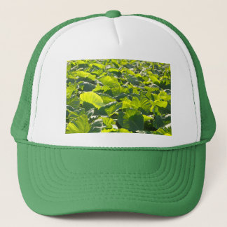Taro plantation trucker hat
