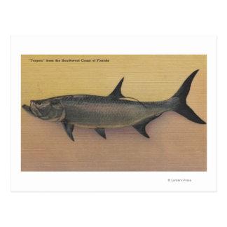 Tarpon Fish from SW Coast of FloridaFlorida Postcard