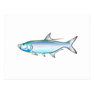 Tarpon Ocean Gamefish illustration vector Postcard