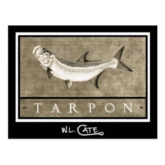 Tarpon Vintage Black & White Postcards