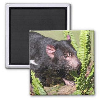 Tasmanian Devil, Australia Magnet