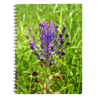 Tassel-Hyacinth Spiral Photo Notebook