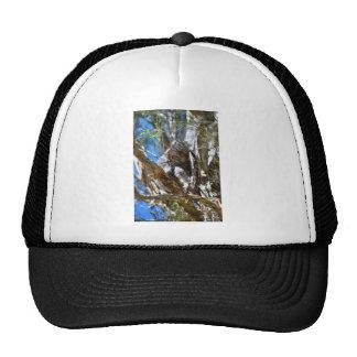 TAWNY FROGMOUTH RURAL QUEENSLAND AUSTRALIA CAP
