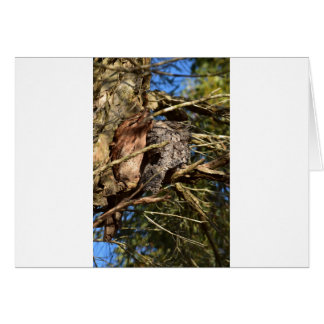TAWNY FROGMOUTHS RURAL QUEENSLAND AUSTRALIA CARD