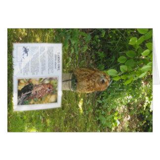 Tawny Owl on Display Card