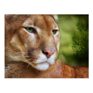 TCWC - Puma Mountain Lion Art Postcard