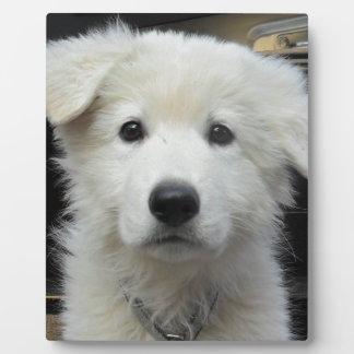teddy_002.jpg photo plaque