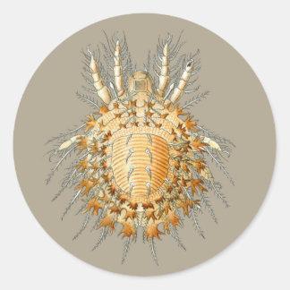 Tegeocranus hericius classic round sticker