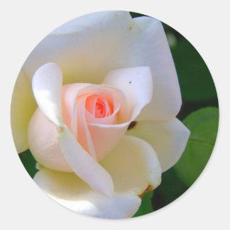 Tender Love Rose Classic Round Sticker