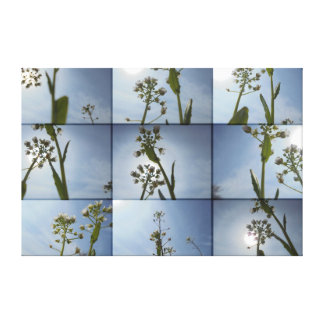 Tender white stretched canvas print