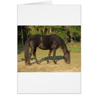 Tennessee Walking Horse Card