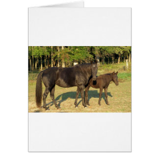 Tennessee Walking Horse Mare and Foal Card