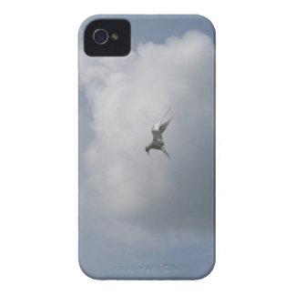Tern in the Sky Blackberry Bold case