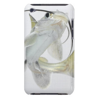 Tete sea catfish (Hexanematichthys seemanni) iPod Touch Covers