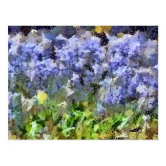 Texas Bluebells Postcard