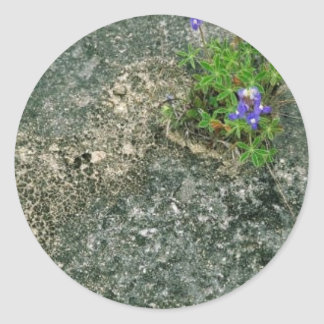 Texas Bluebonnet Round Sticker