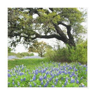 Texas Bluebonnets 16 x 16 Wrapped Canvas Gallery Wrapped Canvas