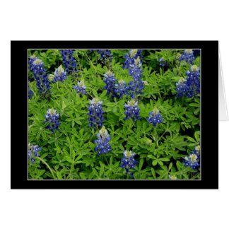 """""""Texas Bluebonnets"""" Greeting Cards"""
