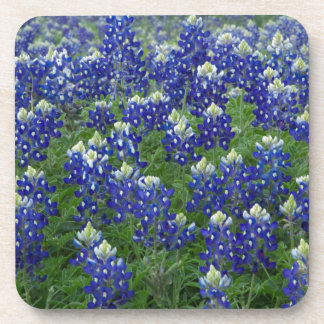 Texas Bluebonnets Field Photo Beverage Coasters